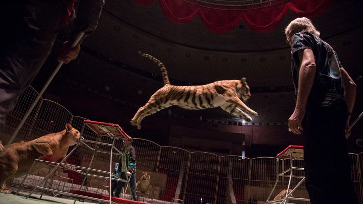 Гаражная распродажа, советский цирк, марафон джаза и еще шесть идей, как провести выходные в Уфе