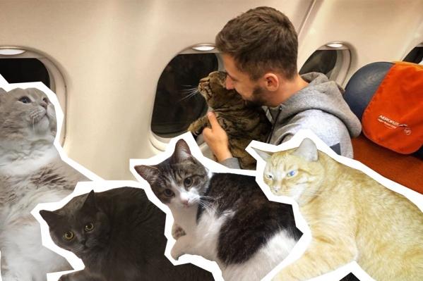 Михаила и его питомца Виктора, которого не пустили в салон самолёта, поддержали десятки упитанных челябинских котиков