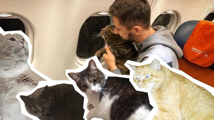 Челябинские жиробасики поддержали кота Виктора, которого не пустили в самолёт из-за лишнего веса