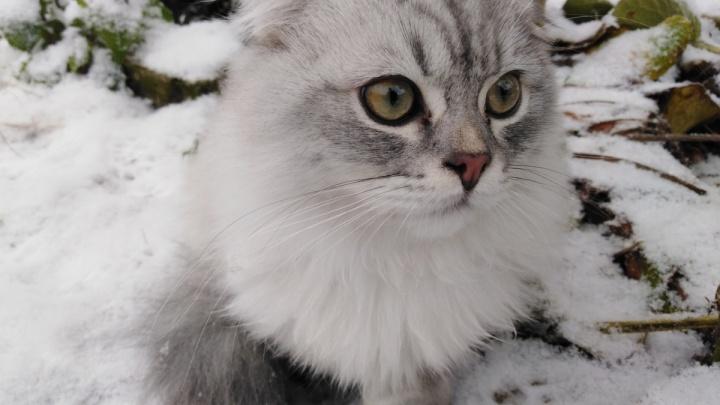 Снег и приближение зимы: какая погода ждет тюменцев на следующей неделе