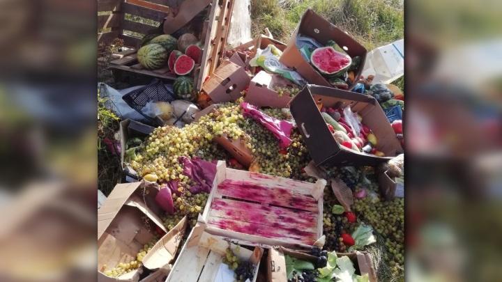 Под Рыбинским местные жители обнаружили свалку из фруктов и овощей