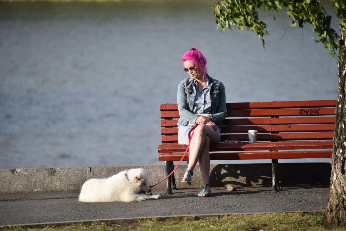 Домашние животные тоже ведут себя здесь спокойней, чем в дни противостояния