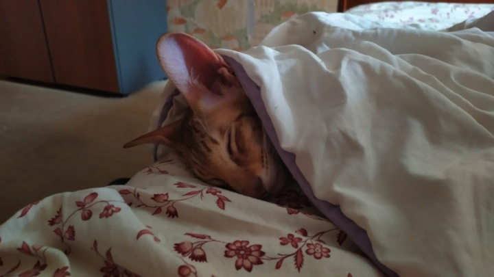 Лучшим фото сентября стал кадр с котиком, который согревается под одеялом