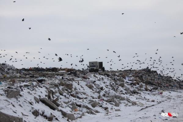 За утилизацию отходов будет отвечать региональный оператор