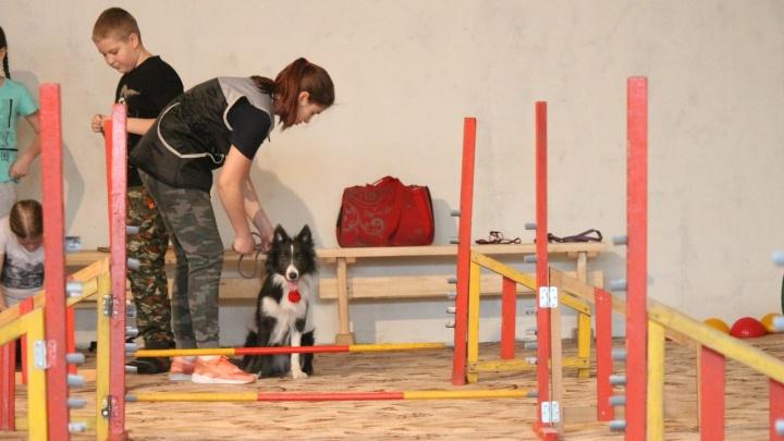В школе «Северного» открыли класс для занятий с собаками