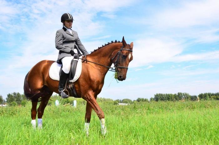 На соревнования приехали 70 лучших коней из разных регионов России