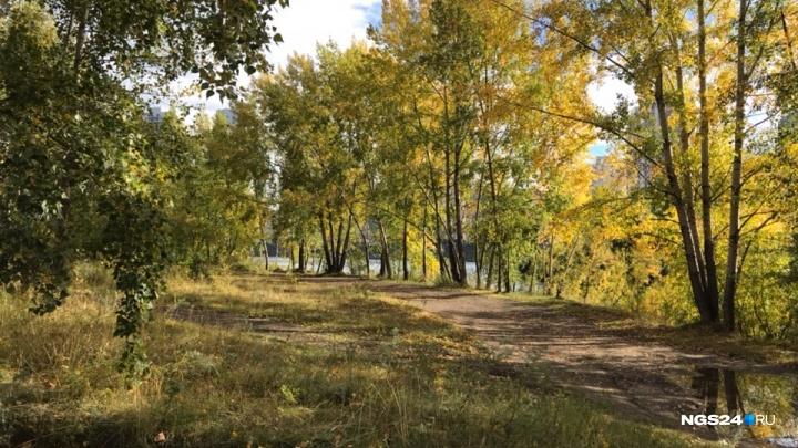 Аномально тёплую неделю ожидают синоптики в Красноярске