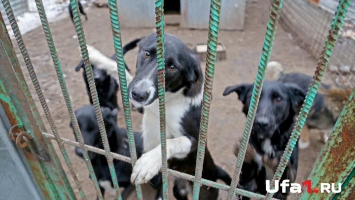 Уфимские спасатели вызволили пса из канализации