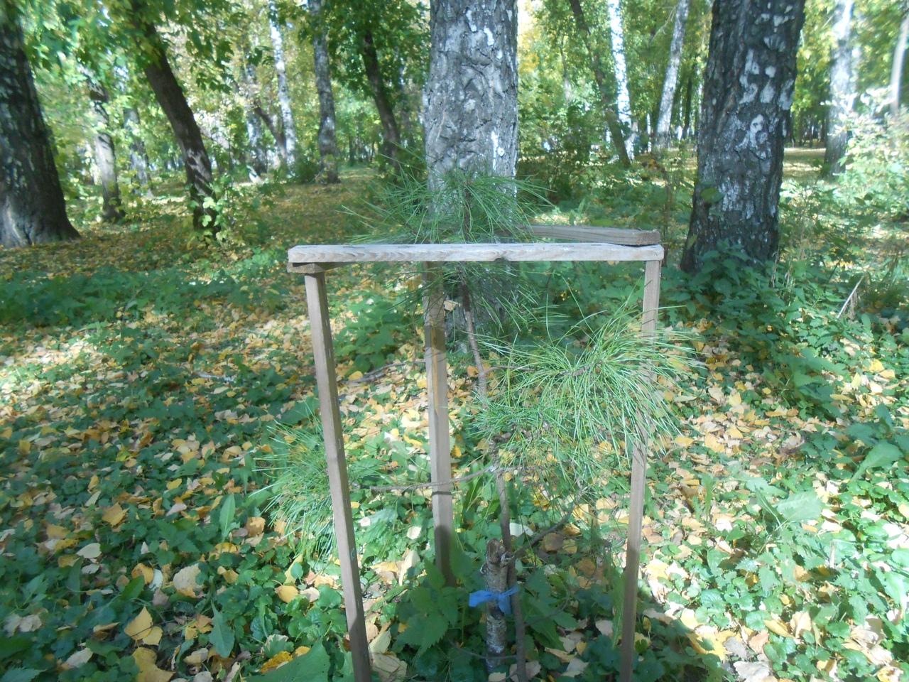Вот такие оградки вокруг деревьев часто разрушают посетители парков, рассказала Марина