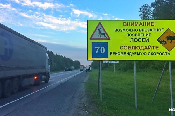 Недавно на трассах Новосибирска появились знаки, предупреждающие о внезапном появлении лосей