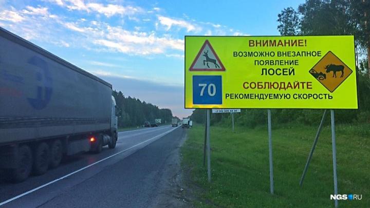 Лось погиб под колёсами иномарки под Новосибирском