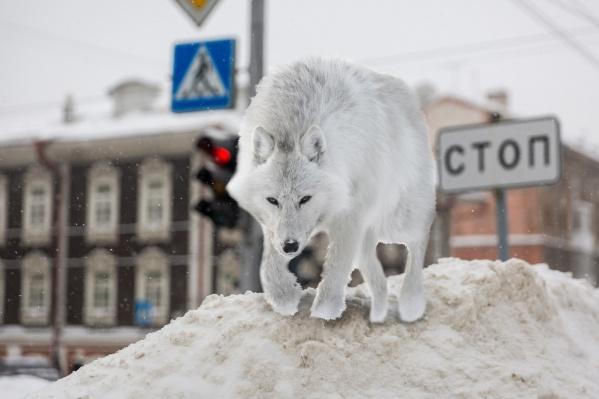 Волк укусит за бочок всех, кто плохо убирает улицы и дворы