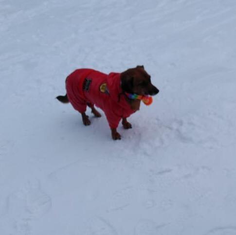 Алёнка Пянковская гуляет со своей собакой, только когда пёс в специальном комбинезоне