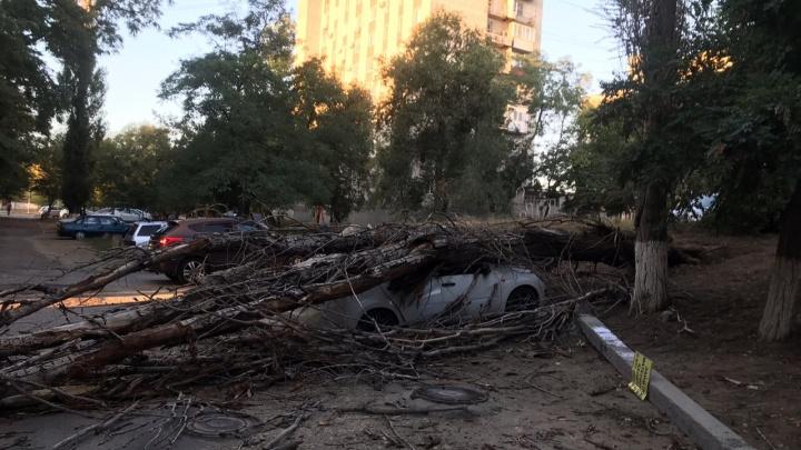 В Волгограде упавшее дерево раздавило «Ладу-Гранту»