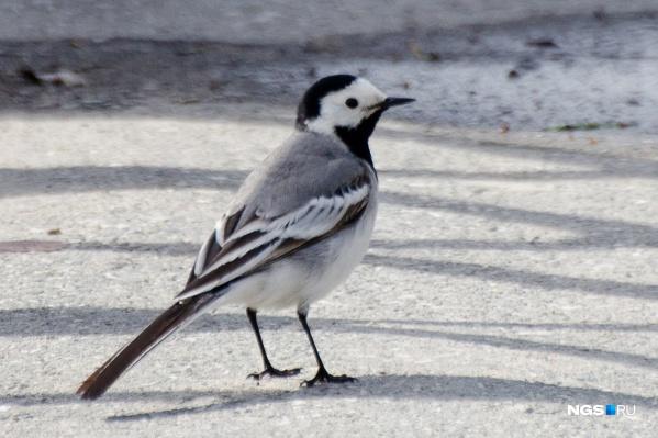 Птица не успела вывести потомство, поэтому гнездо просто выкинули из машины