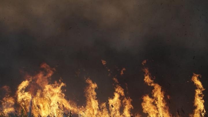 Площадь пожара в Кумженской роще достигла 5,5 гектара