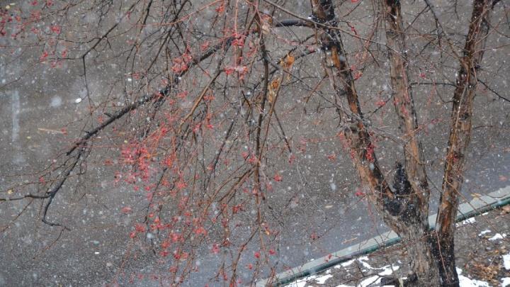 Снег, рябина и пёсик: новосибирцы завалили Instagram фотографиями субботнего снегопада