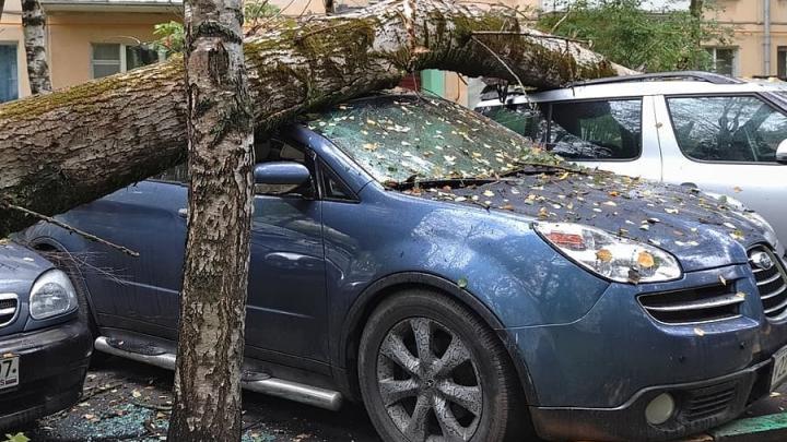 Упавшее в Западном дерево повредило пять машин