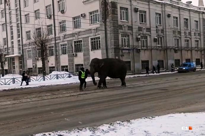 Пока слонов ловили, пришлось перекрывать дорогу