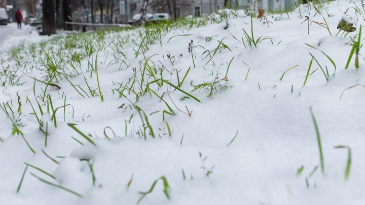 Мокрый снег и снежная крупа: в Прикамье ожидаются холодные выходные