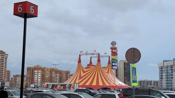 На парковке «Планеты» разместился купол цирка с собачками, леопардами и гимнастами