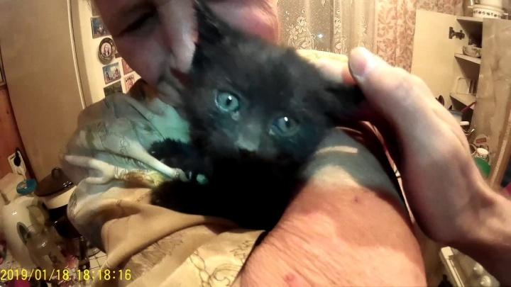 В Екатеринбурге спасли котенка, который пять дней просидел под полом на кухне