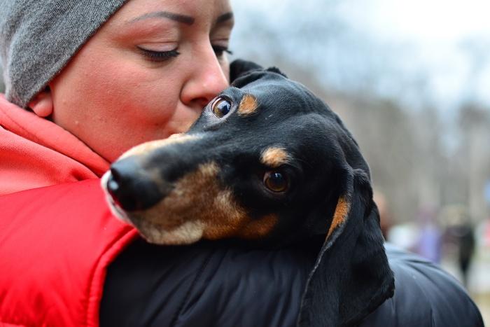 Жителям Новосибирска показали в целях благотворительности красивых собак