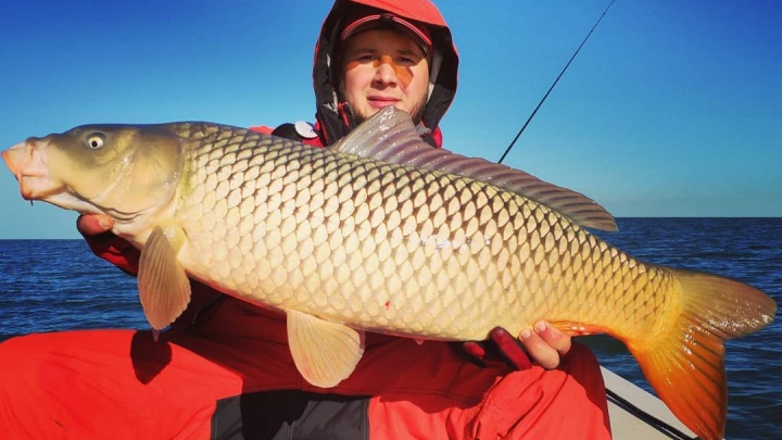 Рыба мечты: новосибирец случайно поймал в море 10-килограммового сазана