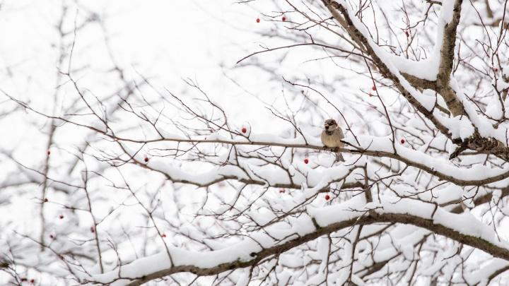 Первый настоящий снег в Ярославле: 10 фото города, в который пришла зима