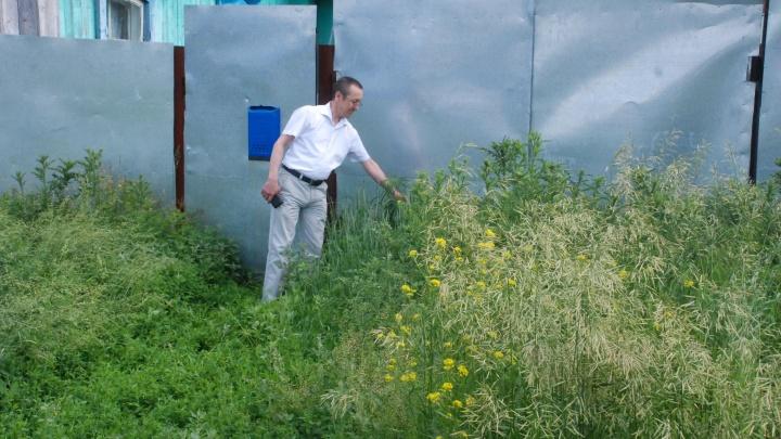 В Уфе избавились от дикорастущих наркосодержащих растений