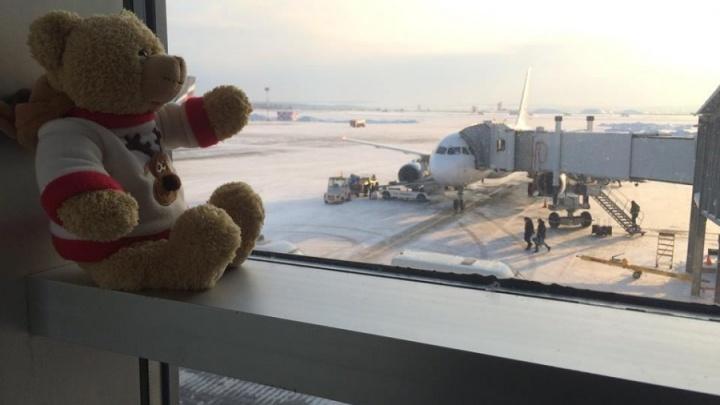 От старых кукол до часов за 1,5 миллиона: экскурсия по комнате забытых вещей в аэропорту Кольцово