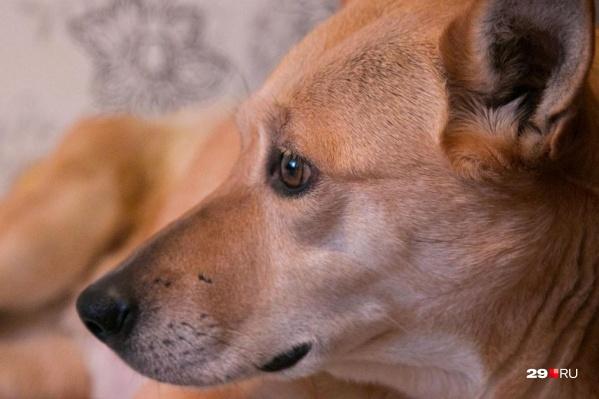 За доброй историей про собаку, которую миновала болезненная смерть, стоит целая интернет-война. Почему конфликтуют ее спасатели?