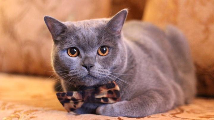 Где в Уфе кастрировать кота: адреса, цены, советы ветеринара