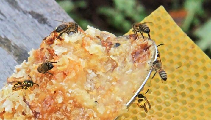 В Башкирии нашли виновных в массовой гибели пчел
