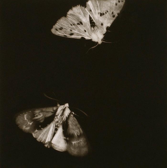 Сара Гиллеспи, «Стрельчатка ольховая и моль горностаевая»