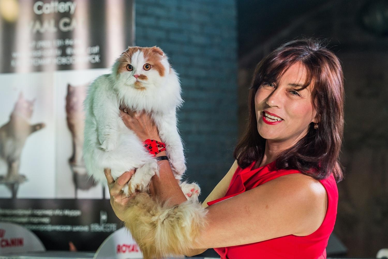 Породистые кошки кочуют из выставки к выставке и завоёвывают разные титулы