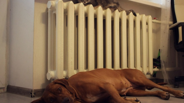 Вот она, правда: стало известно, почему в двух районах Самары отключили отопление