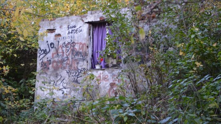 Мистика и ореховые деревья. Что скрывается в долинах малых рек Перми, и почему по ним надо гулять