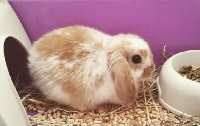 В Башкирии свора бродячих псов растерзала десятки кроликов