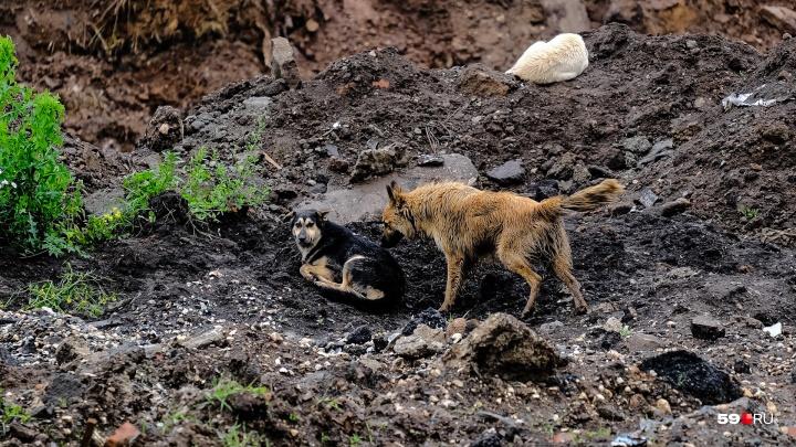 Источник 59.RU: руководство Мотовилихинских заводов просит молчать о нападениях собак на территории