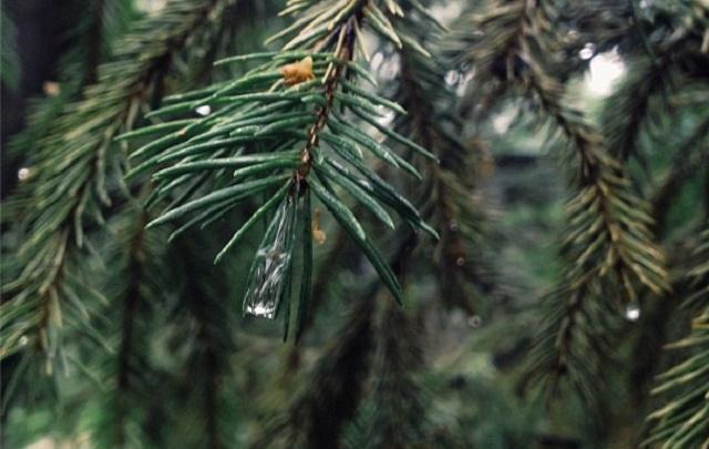 Зауральцы смогут посадить в лесу деревья в компании чиновников
