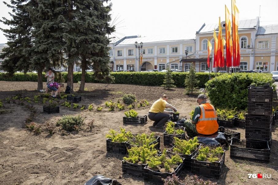 Ярослаские клумбы Илья Варламов назвал немодными