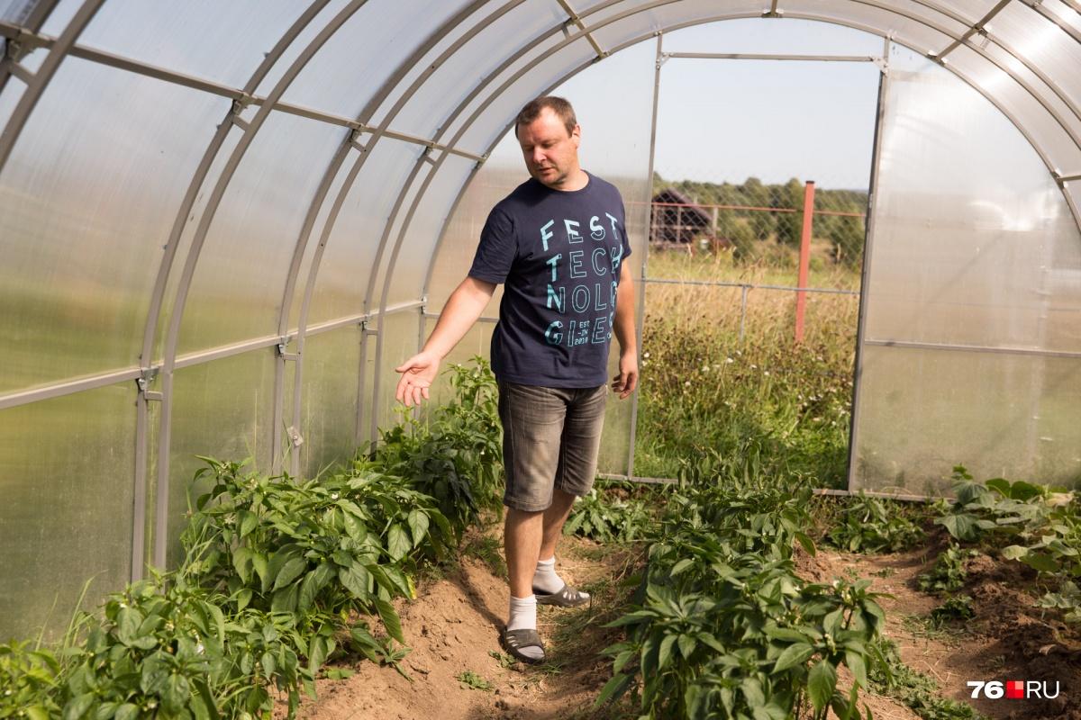 На участке несколько парников. Супруги там выращивают перцы и томаты