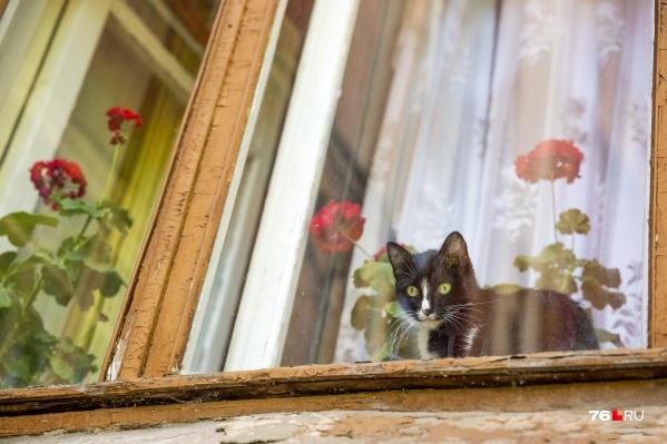 Окна — любимое место домашних котиков
