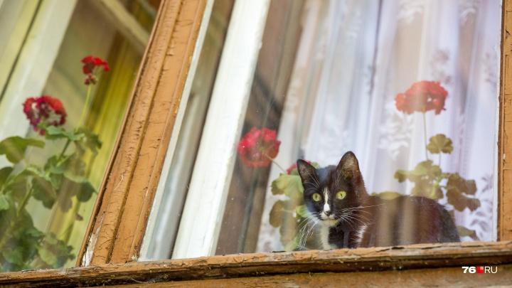 Французские, одинокие и с котами: окна Ярославля, в которые хочется заглянуть