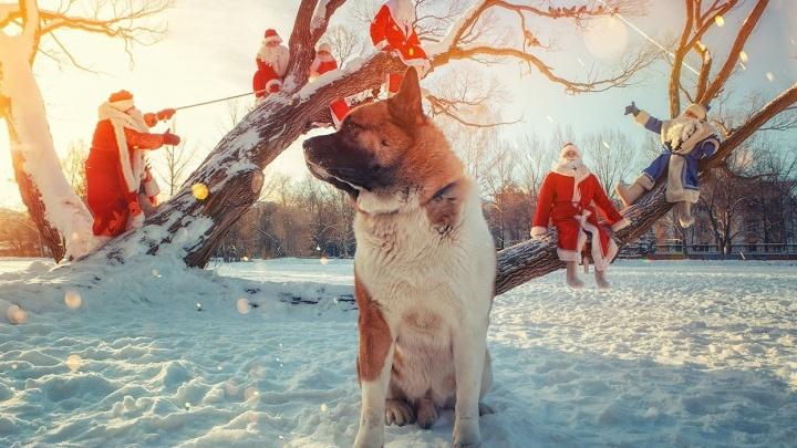 Уральцам предложили представить, как готовятся к Новому году Ёжик в тумане, Дед Мороз и Женя Лукашин