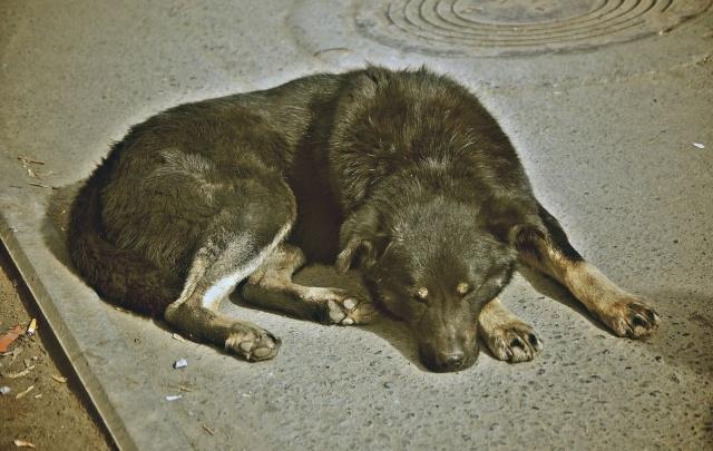 В Курганской области выявили случай бешенства у собаки