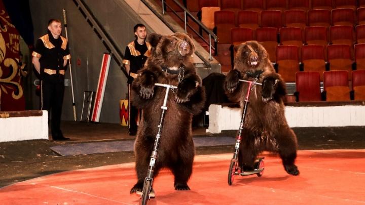 Шоу японских барабанщиков и медведи на гироскутерах: планируем выходные в Омске