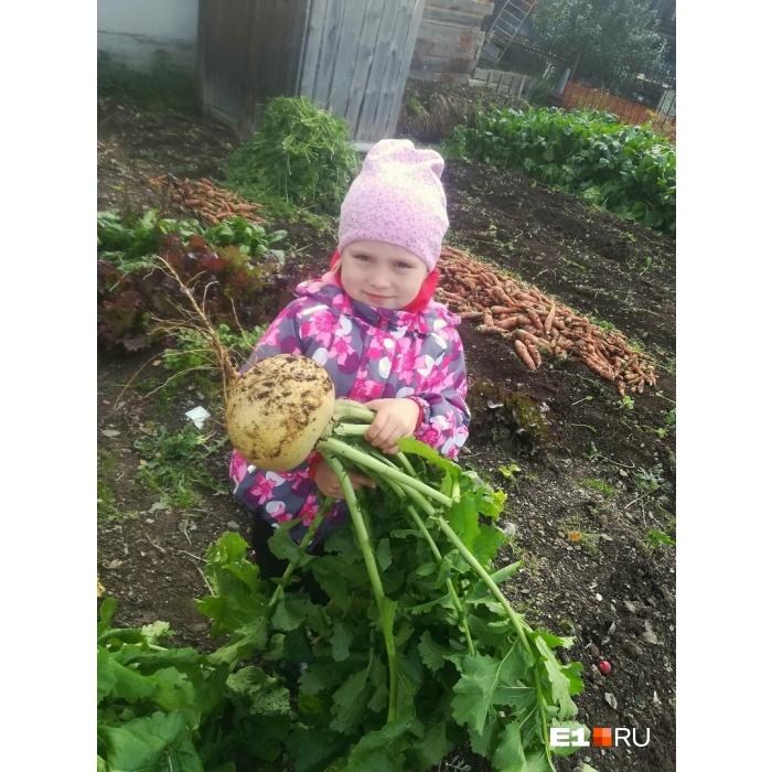 Дети помогают собирать урожай