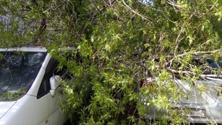 В Уфе дерево рухнуло и накрыло две легковушки